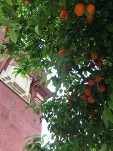 Orange tree everywhere