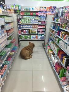 7-Eleven dog