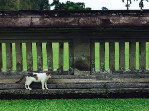 First cat spotted at a temple in Mengwi near Ubud
